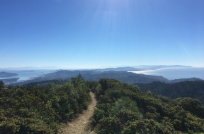 Mt. Tam Views and Redwoods hike