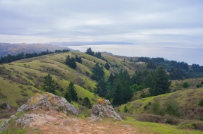 Trail Running 101: The Dipsea Trail
